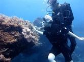 Une voûte sous-marine attire des touristes à Quang Ngai