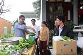 Lâm Dông exporte des bananes Laba vers le Japon