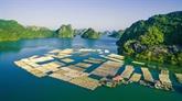 Quang Ninh développe l'aquaculture en eau profonde