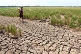 Efforts de Binh Thuân contre la sécheresse