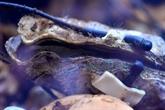 L'huître, sentinelle des pollutions marines