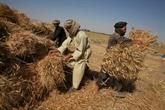 Les conflits et les chocs climatiques aggravent l'insécurité alimentaire