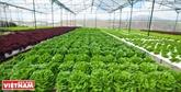 Lâm Dông arrive en tête dans l'attraction des IDE dans l'agriculture de haute technologie