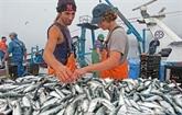 Portugal: Interdiction de la pêche de la sardine du 29 septembre au 16 mai prochain