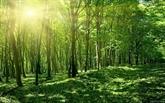 Le pays reboise 130.858 ha de forêt