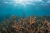 Des expériences japonaises en matière de gestion des océans