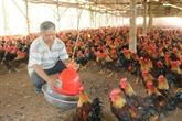 Le Vietnam cherche à améliorer la qualité des produits d'élevage