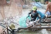 Vietnam, le plus gros exportateur mondial de pangasius