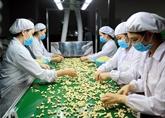 Vietnam le plus grand exportateur mondial de noix de cajou en 2018
