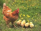 Devinettes populaires sur les animaux