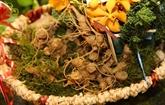Le ginseng de Ngoc Linh de Kon Tum exposé pour la première fois à Hanoï