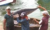 Le Vietnam met le cap sur la pêche durable