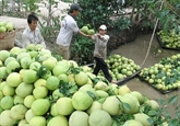 Le secteur des fruits et légumes vise 10 milliards de dollars d'exportations pour 2025