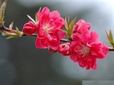 Fleurs, fruits et corbeilles de cadeaux: les