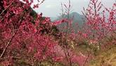 Ouverture du 2e festival des fleurs de pêcher à Lang Son