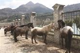 Lào Cai: le marché aux chevaux de Bac Hà, une fête haute en couleurs