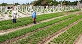 Visioconférence pour faire le bilan du secteur agricole en 2018
