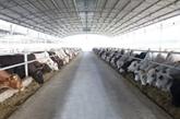 Le groupe Hoà Phat va accélérer l'approvisionnement de la viande de bœuf australienne au Vietnam
