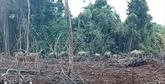 Dông Nai: les gardes-forestiers travaillent pour surveiller les éléphants affamés