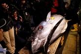 Record de 2,7 millions euros pour un thon aux enchères