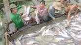 Le plus grand projet de pangasiculture au Vietnam mis en chantier