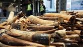 Punition sévère pour le trafic d'animaux sauvages et de plantes
