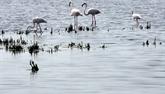 Camargue : un ouvrage hydraulique pour restaurer l'habitat naturel de centaines d'espèces