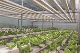 Quand les décharges deviennent des jardins de légumes bio