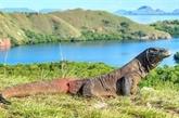 L'Indonésie construira un musée des dragons rares de Komodo