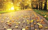 Chant de l'exilé par une nuit d'automne
