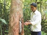 Lapiculture durable des Gie Triêng de Quang Nam