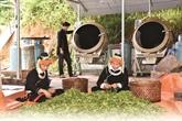 Minorités de Hà Giang : du thé bio, facteur de développement