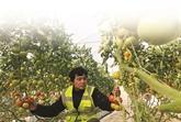 Travailler en ferme en Australie : une expérience unique