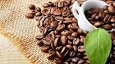 CNBC : le Vietnam a enregistré une forte croissance dans l'exportation de café