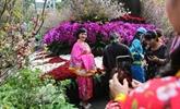 Le 5e Festival des fleurs de cerisier de Hanoï se tiendra en mars 2020