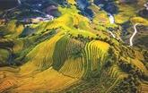 La beauté des rizières en terrasses de Mù Cang Chai