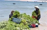 Vietnam et République de Corée s'orientent vers l'économie verte