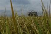 La Thaïlande risque de manquer son objectif d'exportation de riz