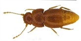 Un insecte nommé Greta