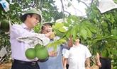 Nouvelle ruralité, nouvelle prospérité à Viêt Dân
