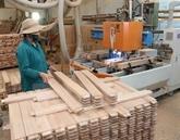 Exportations nationales de bois : 11 milliards d'USD visés cette année