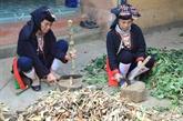 Valorisation des contributions des minoritaires ethniques de Hanoï