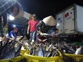 Les exportations de thons restent sur une pente ascendante