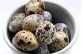 Singapour suspend ses importations d'œufs de caille en provenance de Malaisie