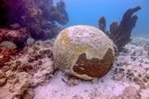 Les coraux des Caraïbes en danger de mort