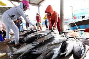 Lutte contre la pêche illégale  la CE prend note des efforts du Vietnam