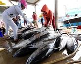 Lutte contre la pêche illégale : la CE prend note des efforts du Vietnam