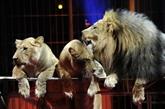 Paris vote contre les spectacles d'animaux sauvages dans les cirques