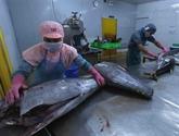 Fortes exportations de thon au Mexique