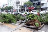 La tempête Matmo fait un disparu et 14 blessés à Quang Ngai